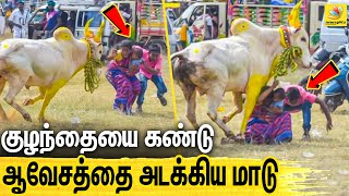 Anger Bull Jumps On Mother with a child | Jallikattu, Viral