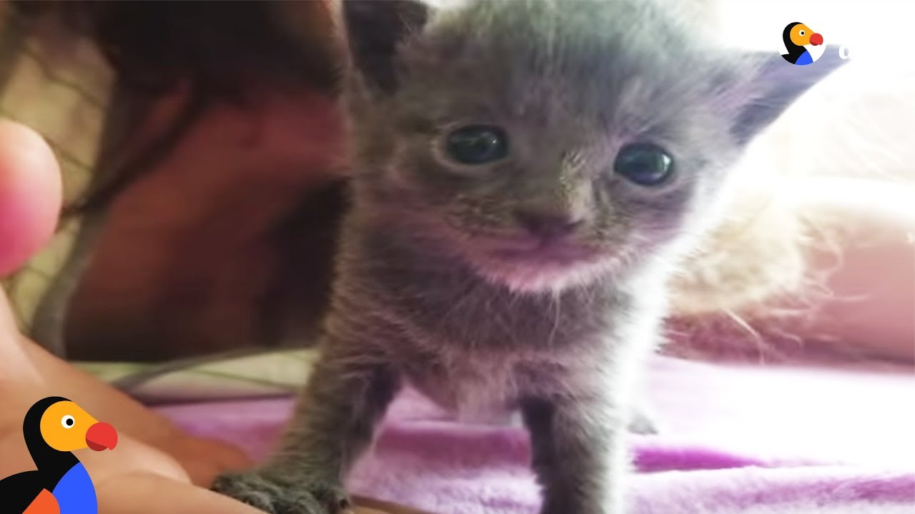 Tiny Kitten Rescued From Flea Market