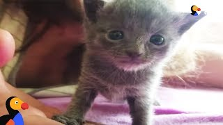 Tiny Kitten Rescued From Flea Market | The Dodo