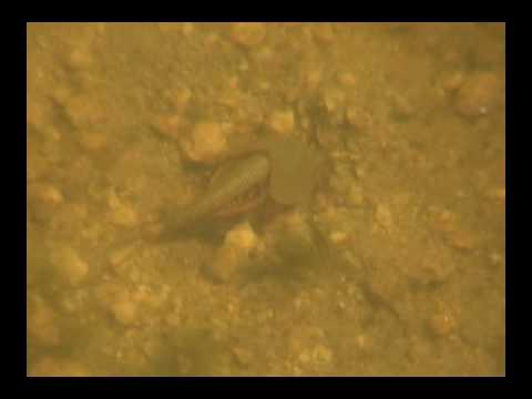 Alien found in Mojave Desert oasis 2008 (Joshua Tree National Park, California)