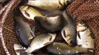Ловля карася на озере(Ловля карася на озере. Сегодня вы посмотрите рыбалку на карася , ловля будет проходить в небольшом озере..., 2016-08-13T18:34:06.000Z)
