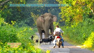 Download Behavior & chasing Of Elephant (part-1). Mp3 and Videos