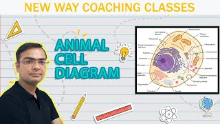 How to draw diagram of Animal Cell?