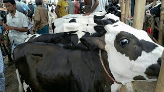 Cow market / Khamari bokna basur price / BD Life Trailer