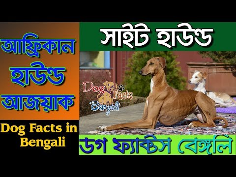 Azawakh Dog facts in Bengali | African Sight Hound | Dog Facts Bengali