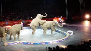 Ringling Bro Circus Final Shows, Legends 3/9