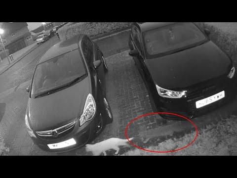 Cámara de seguridad muestra un gato fantasmal que acababa de fallecer siguiendo a su amigo felino