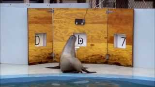 Clever Sea Lion Identifies Numbers and Letters! | Part 2 | Extraordinary Animals | Earth