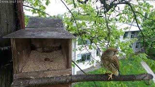 CEH Kestrel nest box (outside)