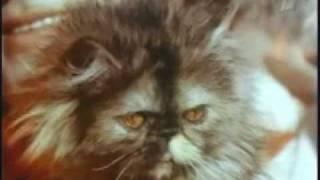 """Кот в мешке - """"Выше радуги"""""""