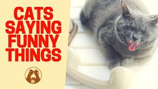 Cats ???? Saying Funny Things - Funny ???? Cat Videos