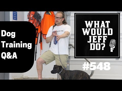 dog-crate-training-|-dog-reacts-around-windows-|-what-would-jeff-do?-dog-training-q-&-a-#548