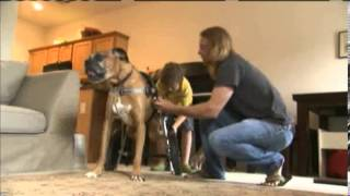 Dog With Disabilities