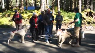 Sled Dog Discovery & Musher