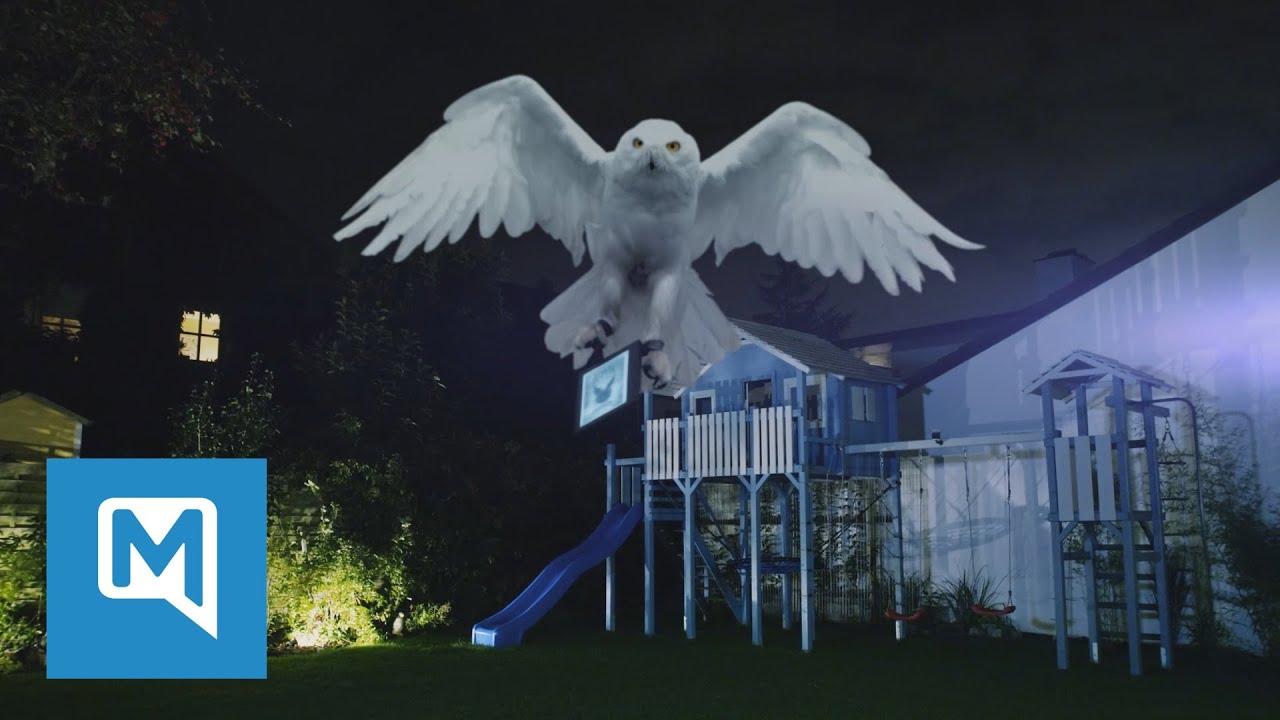 Eule Hedwig Aus Bad Tolz Bringt Neuen Harry Potter Harry Potter Und Das Verwunschene Kind Youtube