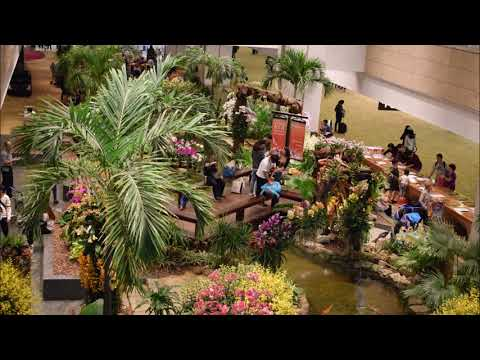 Changi airport tour!! Best airport in the world.