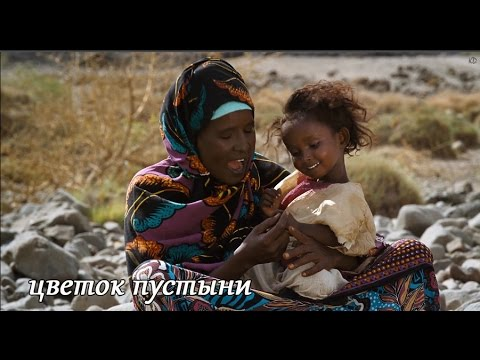 Кино цветок пустыни смотреть онлайн