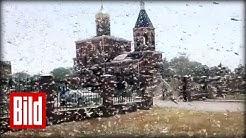Heuschrecken-Plage in Russland ( Bibel / Inferno / Horror / Grasshopper )