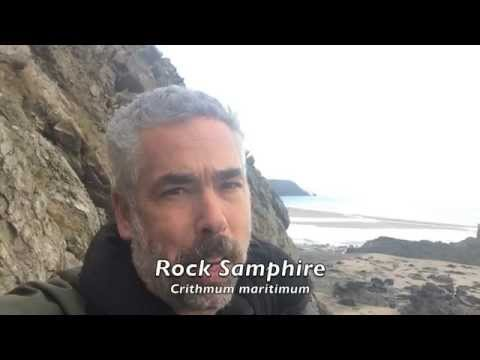Rock Samphire