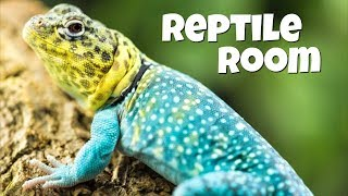 Reptile Videos Compilation