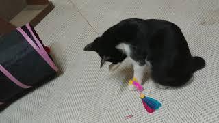이모가 장난감을 사줬어요! #카샤카샤붕붕