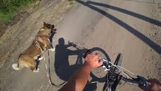 Учимся ездить на велике с собакой в упряжке