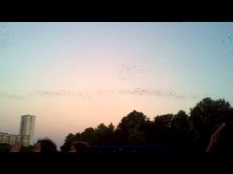 South Congress Bats From Under the Bridge: Austin, TX