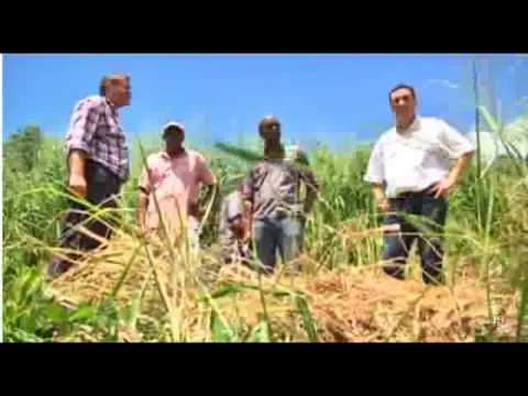 Programme patate douce martinique atv martinique journal de 19h du 6 oct 2015 youtube - Culture de la patate douce ...