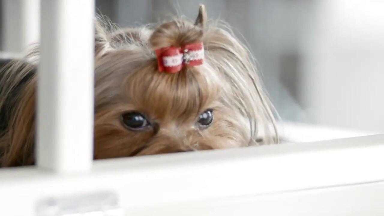 Простатиты у собаки симптомы где вылечит простатит в россии