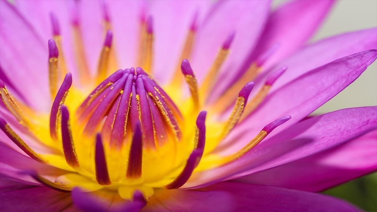 Zen Meditation Music, Soothing Music, Relaxing Music Meditation, Zen, Binaural Beats, ☯3283