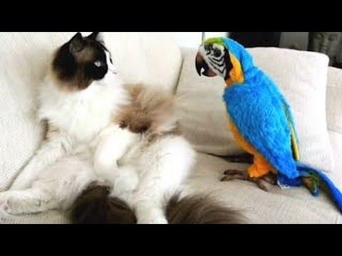 videos de risa de loros molestando a los gatos