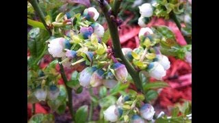 Tour Of Hilda's Organic Garden!