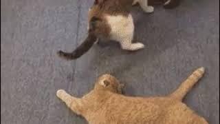 Ленивый кот пробует помочь 😂😂
