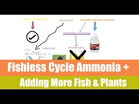 Fishless Cycle And Adding Fish Afterwards | Ask The Aquaponics God