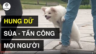 Dạy cún hung dữ - mất kiểm soát (trailer) | Cách huấn luyện chó cơ bản BoṡṡDog | D๐g training