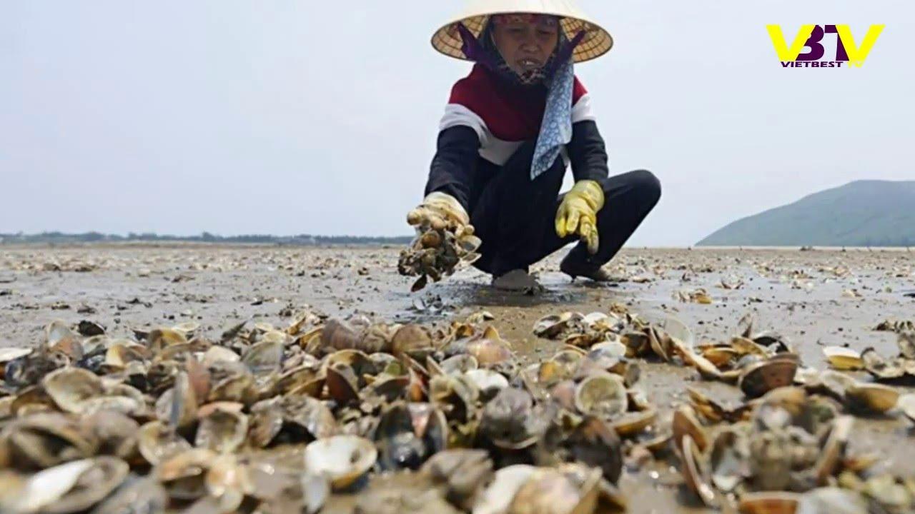 Kết quả hình ảnh cho Thảm họa Formosa