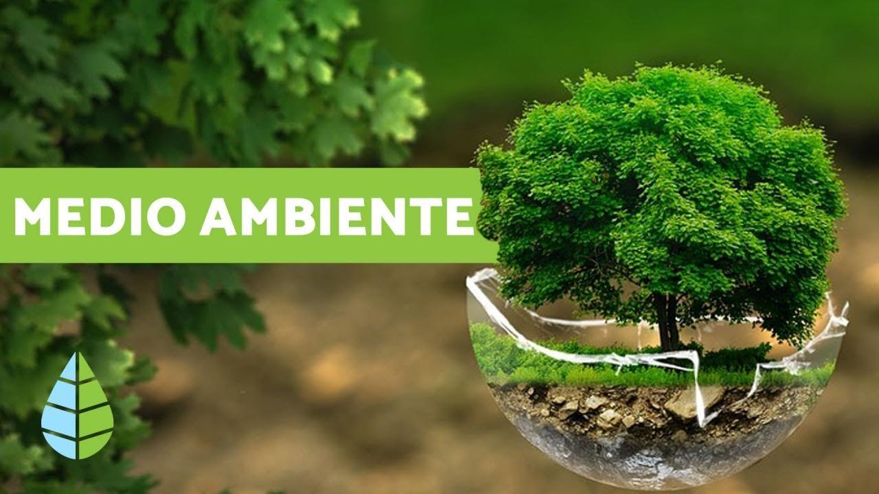 El Medio Ambiente: ¿QUÉ ES EL MEDIO AMBIENTE?