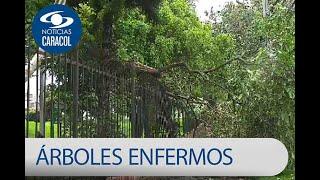 La lucha del Jardín Botánico por los árboles en Bogotá