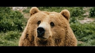 Bear as a Totem and Spirit Guide--Personality Characteristics, Life Lessons and Specific Messages