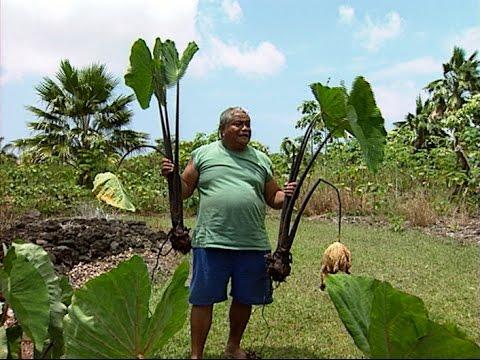 'Ele'ele Naioea Plant Descriptors - with Jerry Konanui