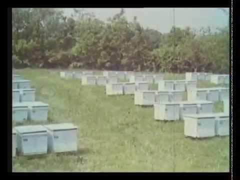 пчеловодство 2014 скачать торрент - фото 11