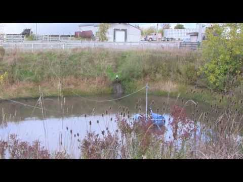 Constructed Wetland to Remove Pathogens From Livestock Truck Washwater