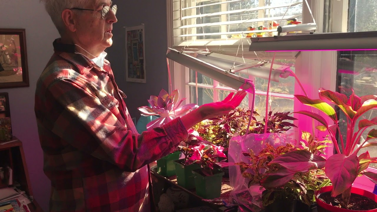 How to use grow lights at home