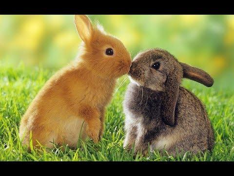 my-cuties-rabbit-wearing-beautiful-clothes---animal-life