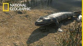 Ewolucja w kilku odsłonach   National Geographic