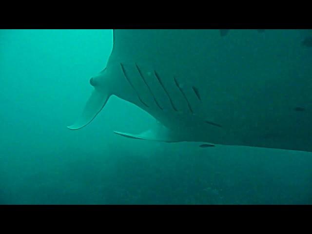 OzDive in French Polynesia - Manta Point in Bora Bora (Sept 2012)