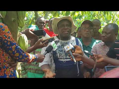 Cocoa farmer rants