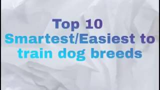 Top 10 Smartest/Easiest to train dog breeds