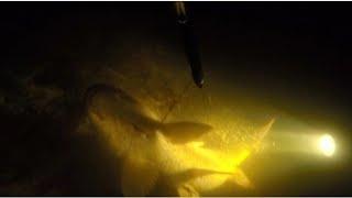 Мощный САЗАН В КОРЯГАХ приготовление рыбы Подводная охота Маныч 2021 Рыбалка