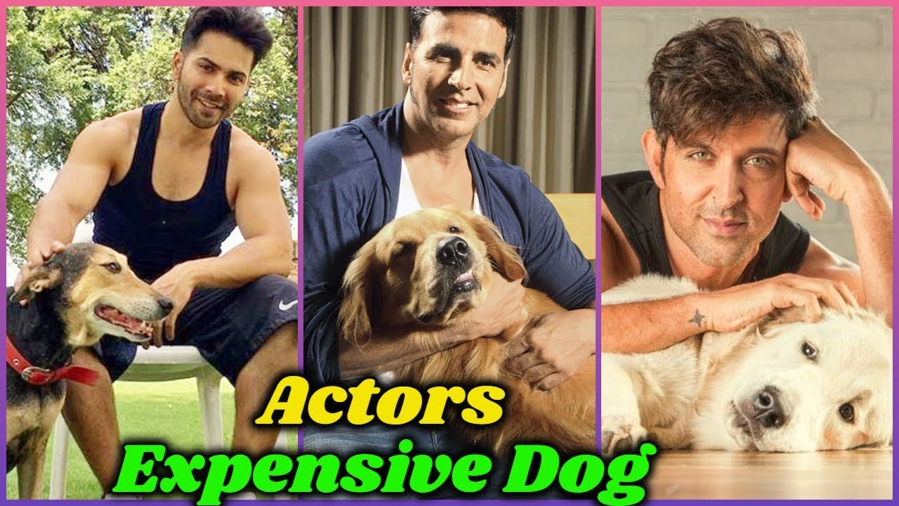 Most Expensive Dogs of Bollywood Actors